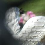 TN: Graveyard scene including a white angel